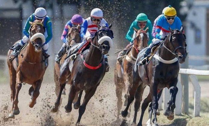 Varios caballos de Tornquist compitieron en la jornada hípica de Coronel Dorrego